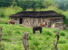 پاورپوینت اصول معماری پایدار و تاثیر آن در اقلیم شمال